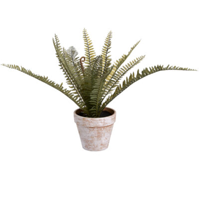 Potted Fern in White Washed Terracotta Pot